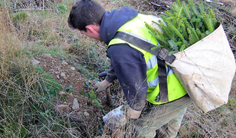 Man planting trees at Gethin Woods