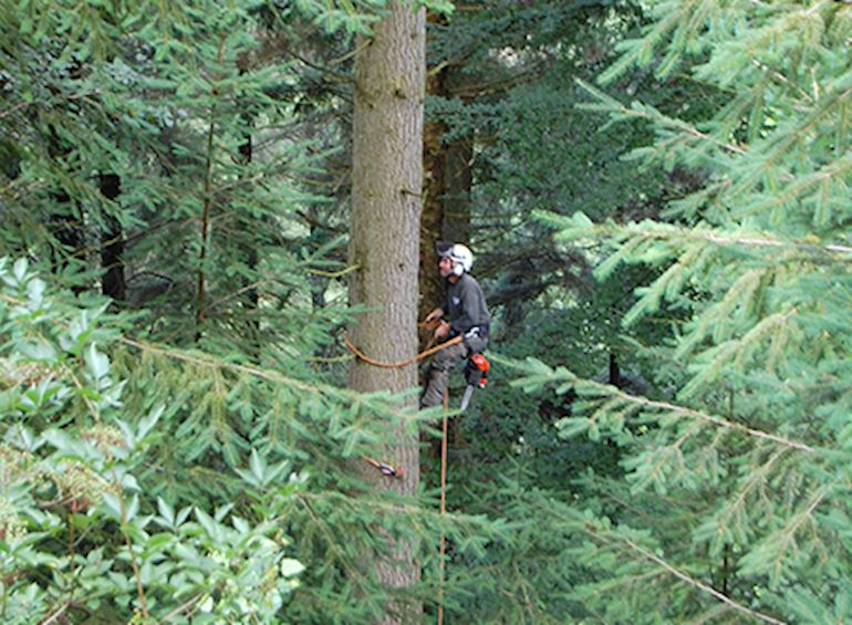 contractor climbing a tree in cwmcarn