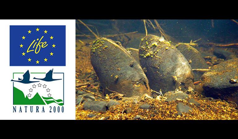 Fisglod perl dŵr croyw EU LIFE