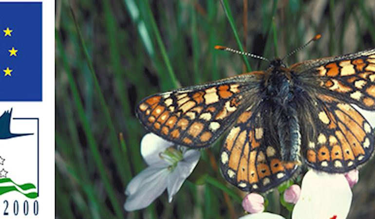 Natura 2000 image of a marsh fritillary butterfly