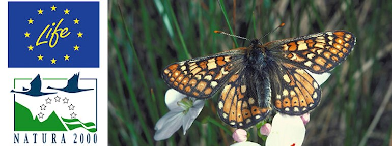 Natura 2000 image of a marsh fritillary butterfly