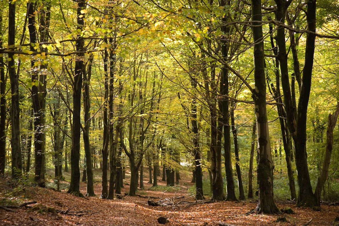 Autumn view at Fforest Fawr