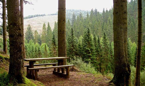 Golygfa o safle picnic yr Ardd Goedwig