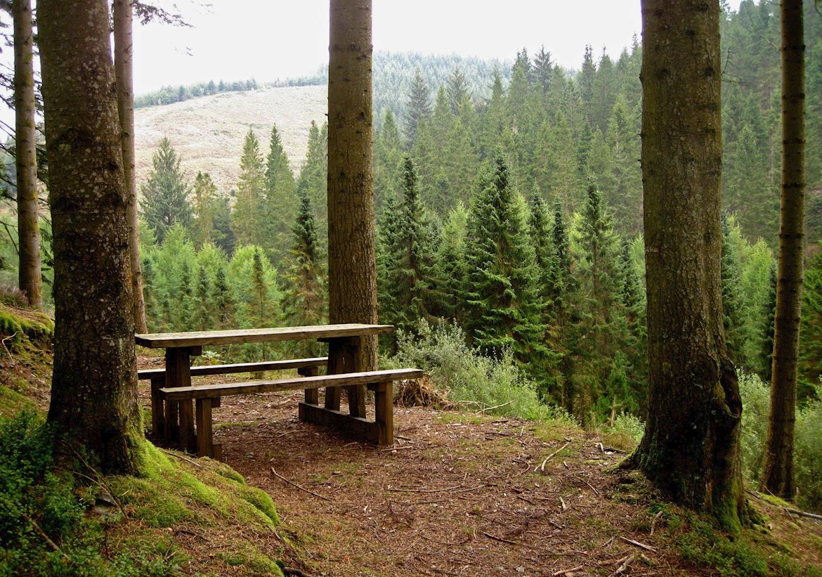 View from the Forest Garden picnic site