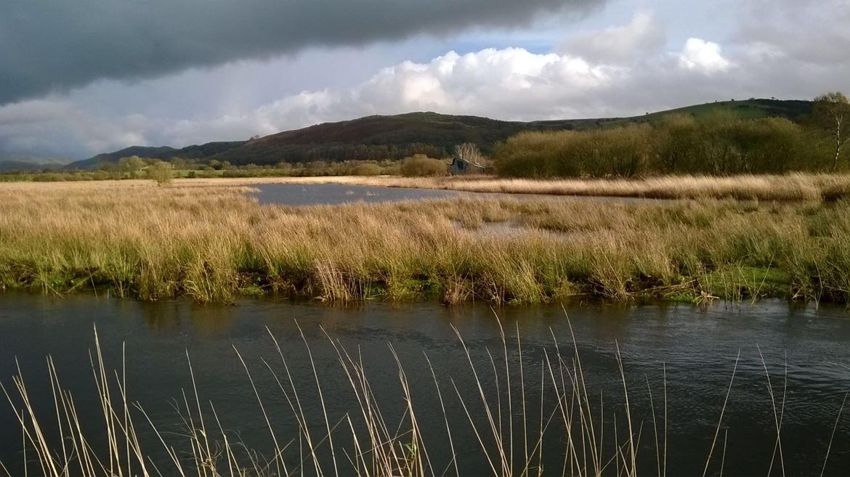 Cors Caron wetlands
