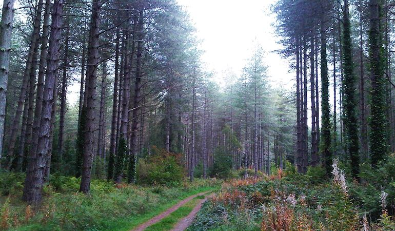 Trail through Newborough Forest