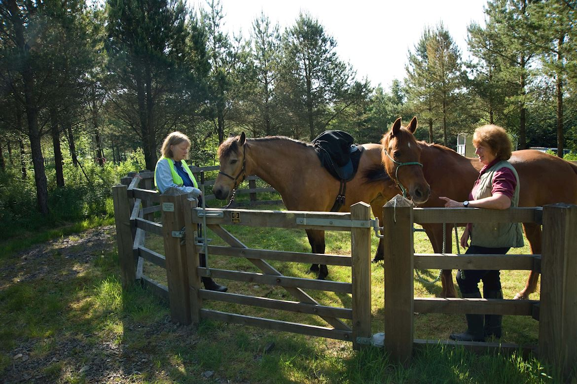 Horseriders in Crychan Forest