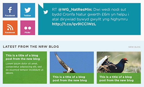 Social and blog squares in the footer