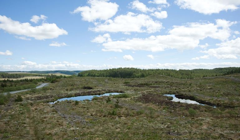 View of a bog covering peat soil