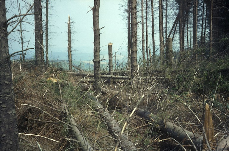 Trees that have been removed