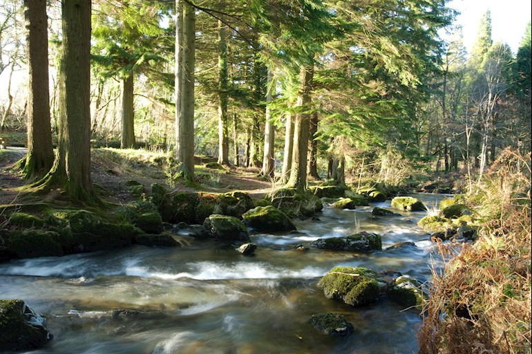 Stream flowing over rocks with trees at the side of the river bank