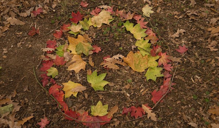 Leaves in a circle