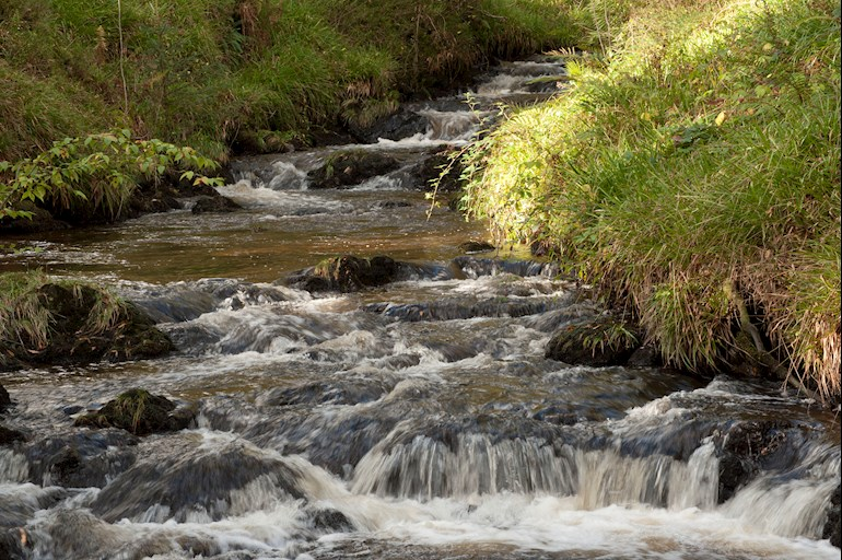 View of a stream