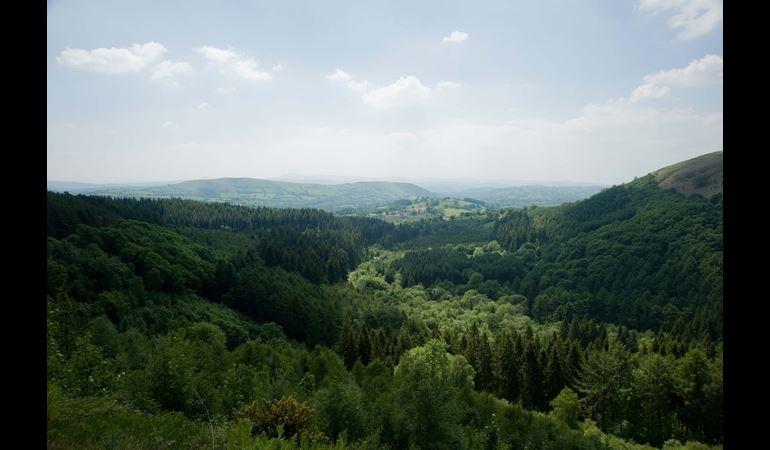Cwm Rhaeadr Forest towards Mynydd Du in the Brecon Beacons