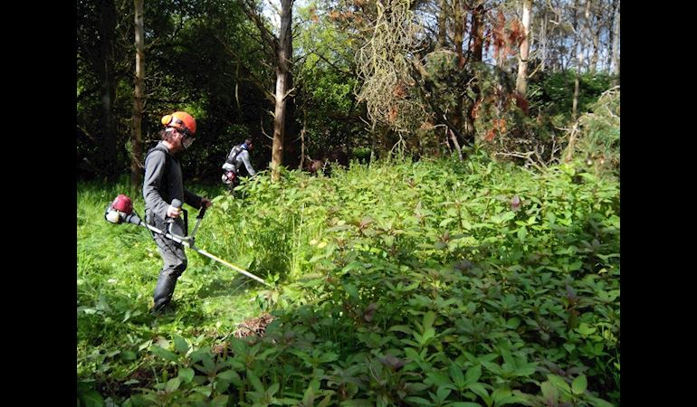 Man cutting Himalayan balsam