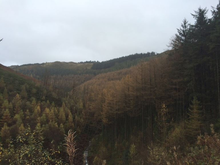 View of the Nant yr Arian forest