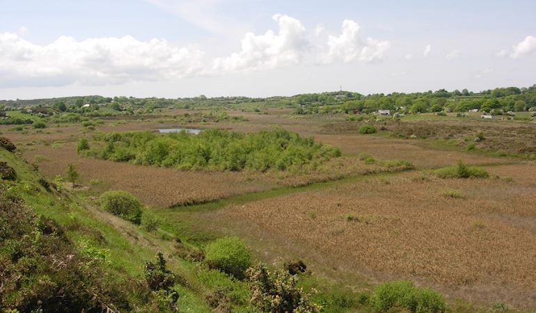 Valley fen Cors Goch anglesey