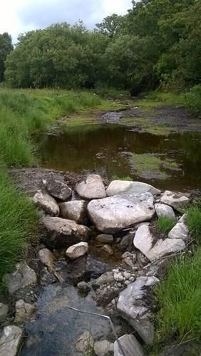 Stream at Afon Eden
