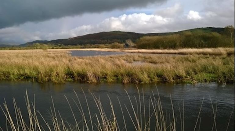 View of a field in Cors Caron
