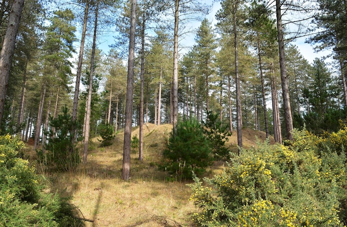 Newborough Forest credit Petersrockypics