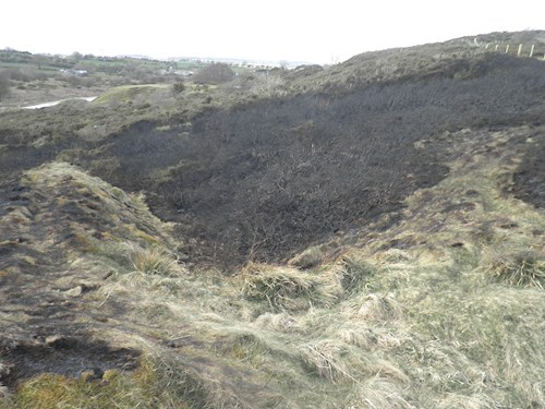 Halkyn mountain damaged by fire