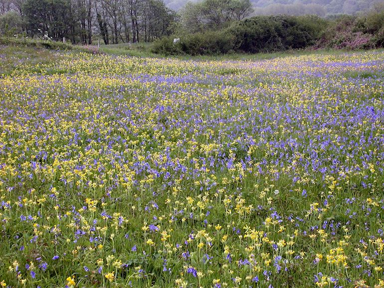 Top Ten Spring Walks 2016