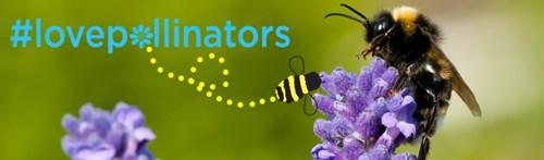 Love pollinators