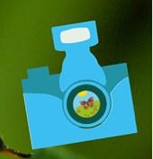 pollinator paparazzi