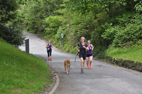 Group of people running on the Bryn Llwyd Trail