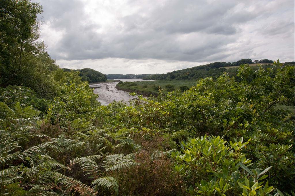 View of Minwear Woods