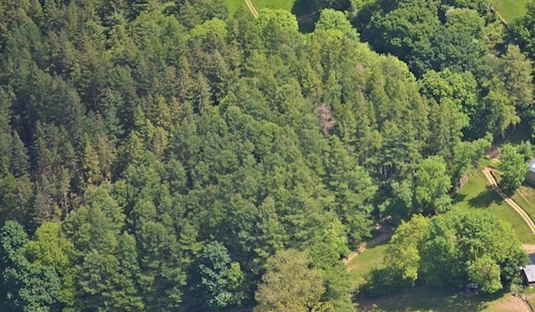 Aerial view of a group of trees