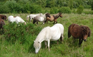 image of horses grazing