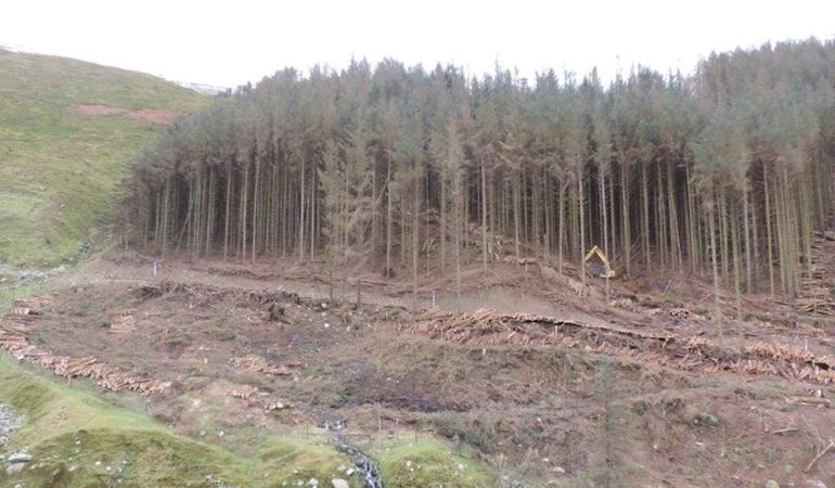 Cleared area of the forest following felling of a group of trees