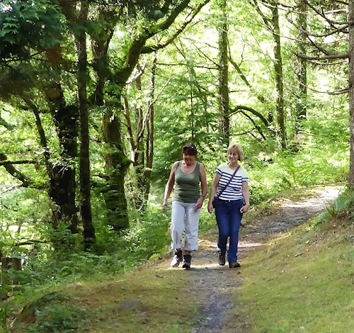 Two walkers in woodland