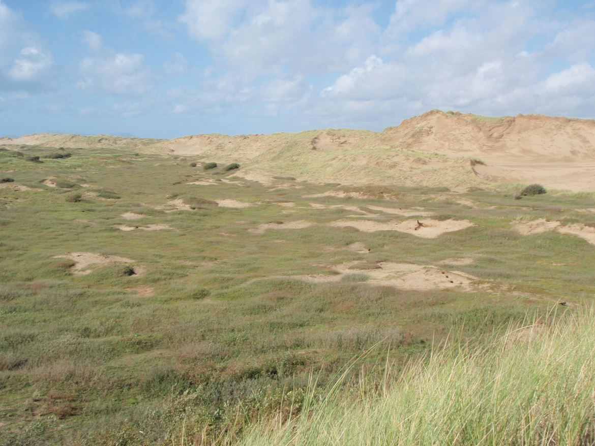 View of the grasslands and sand dunes at Morfa Dyffryn National Nature Reserve