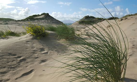 View of the sand dunes at Newborough Warren