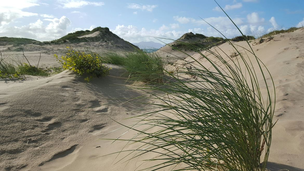 View of the sand dunes at Newborough Warren