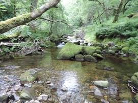 Coedydd Aber Woodland