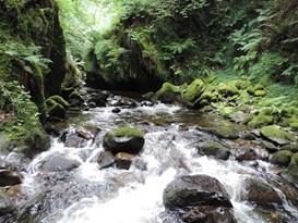 Temperate Rainforest coedydd Aber