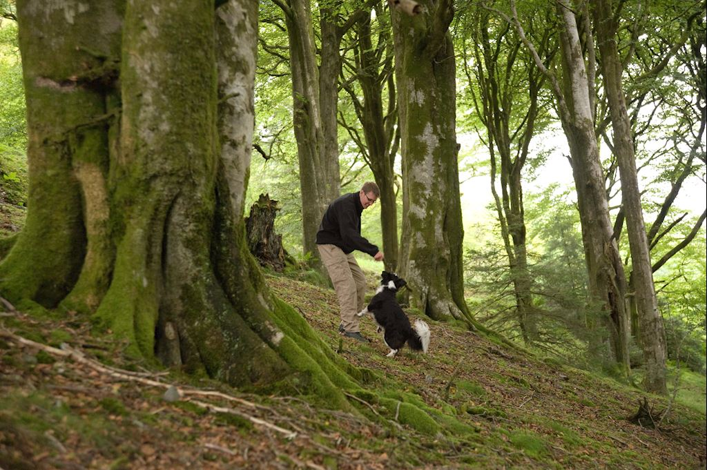 A man with his dog in the woods