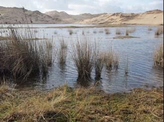 Flooded dune slack at morfa dyffryn