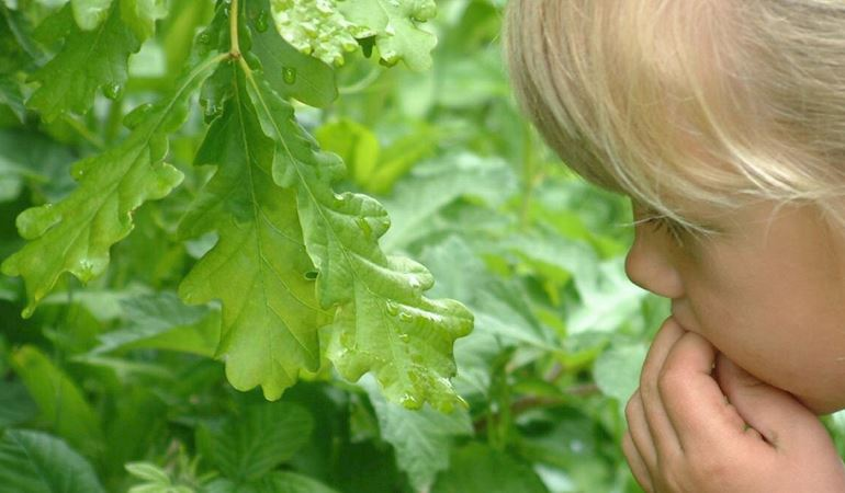 child looking at oak leaves