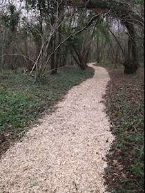 Penhow woodland path