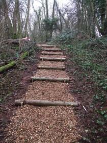 Penhow woodland steps