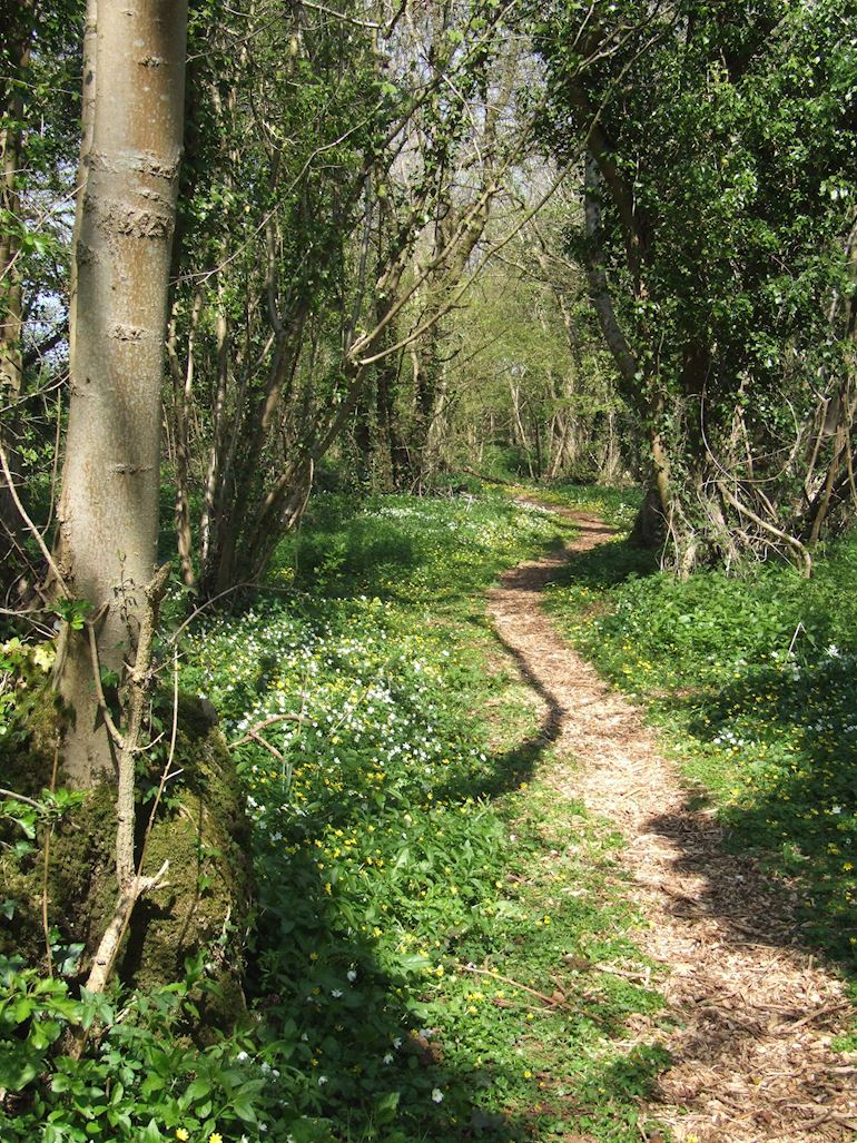 Penhow Woodlands NNR