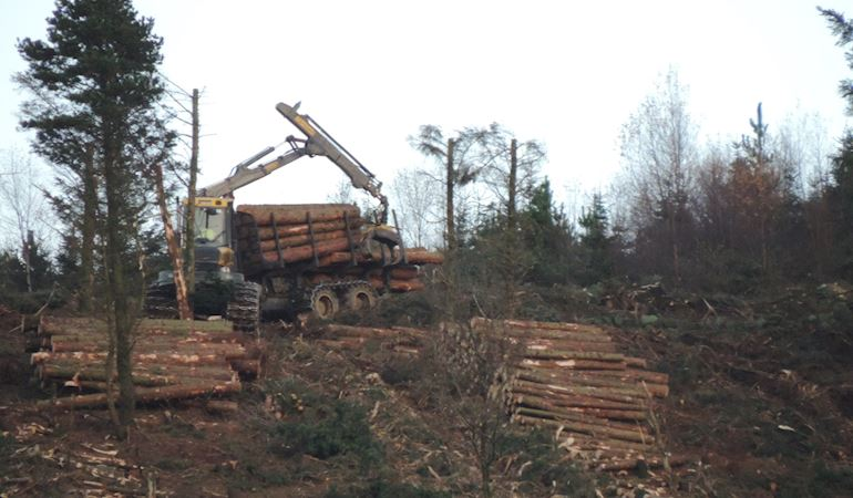 Tree logger collect trees that have been felled