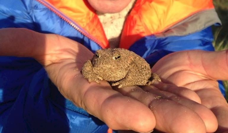 Springwatch presenter Martin Hughes-Games with a natterjack