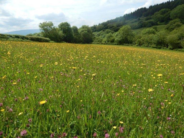 view of grasslands