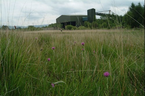 coal field grassland
