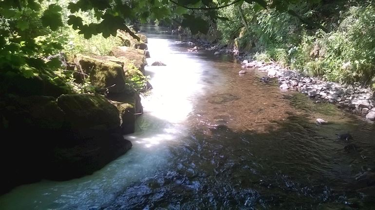 Milk pollution in the Nant Mudduch river